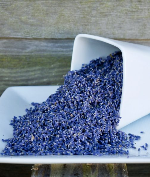 Angustifolia Lavender