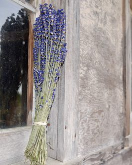 dried English lavender bunch