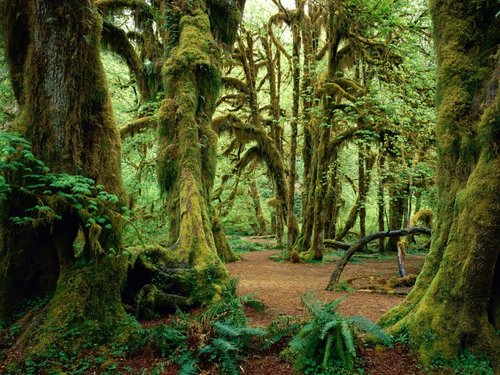 HOH+Rainforest
