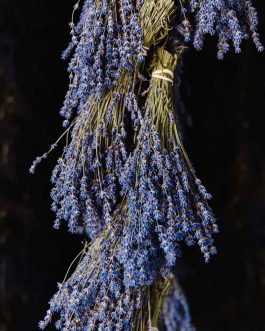 Lavender Hanging to Dry