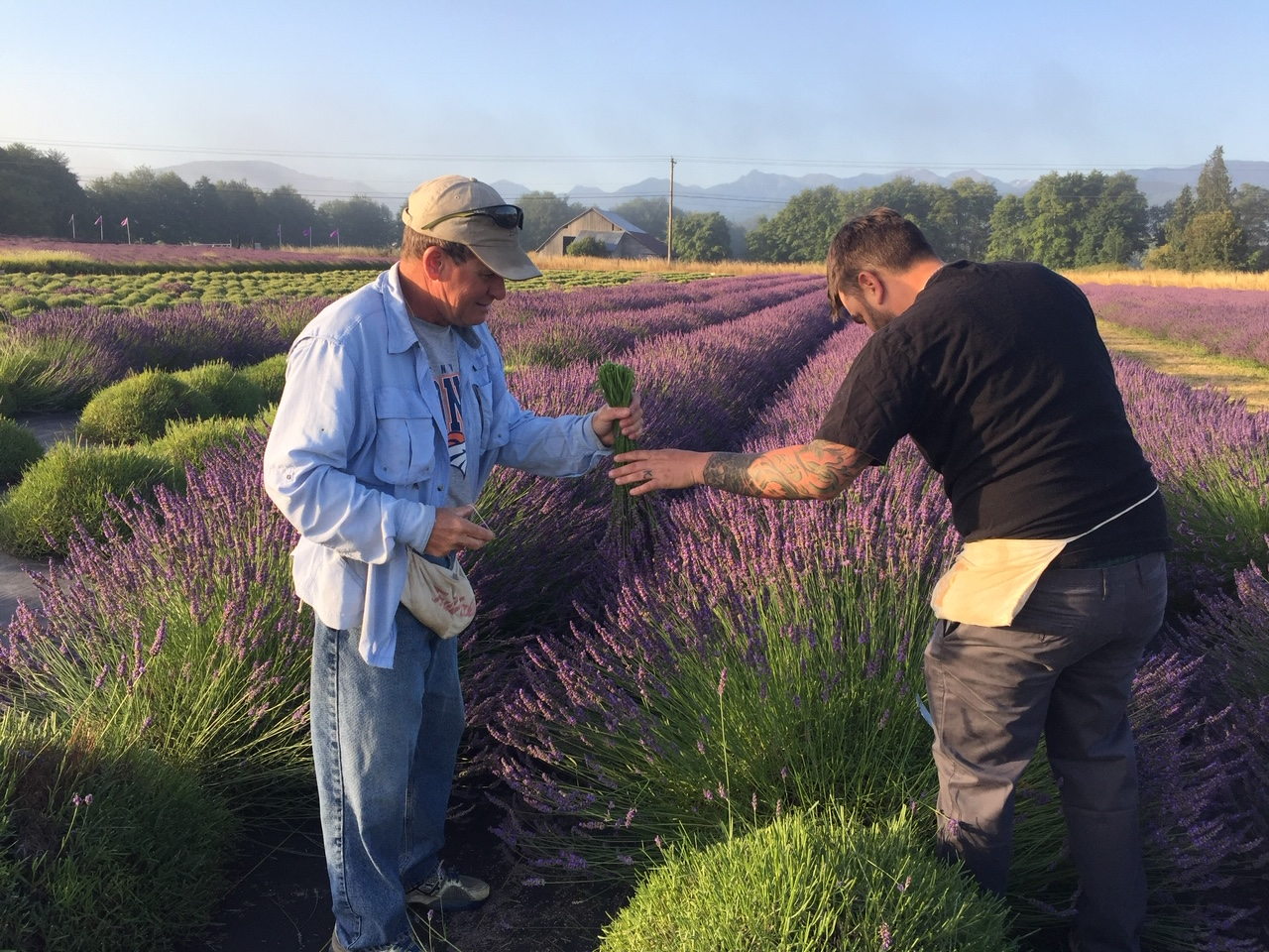 Zion and Mark Harvesting Lavender