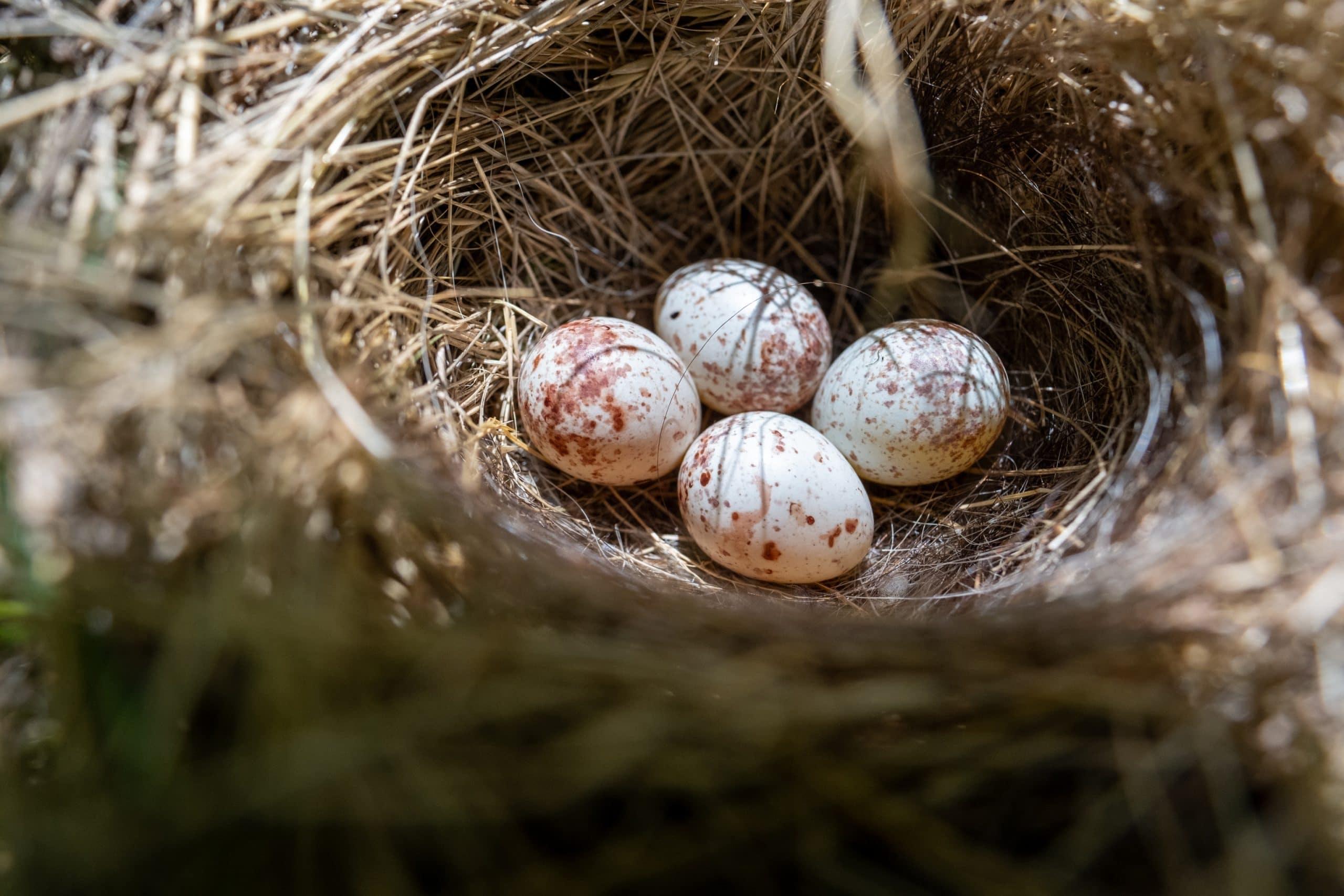 Junko Nest